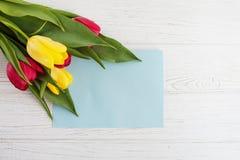 Tulipani colorati e fondo bianco Le congratulazioni di concetto Fotografie Stock Libere da Diritti