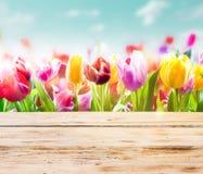 Tulipani Colourful con i bordi di legno rustici Fotografie Stock Libere da Diritti