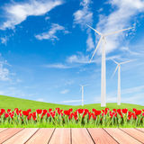 Tulipani con il generatore eolico sul campo di erba verde contro cielo blu Fotografia Stock Libera da Diritti