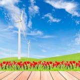 Tulipani con il generatore eolico sul campo di erba verde contro cielo blu b Fotografia Stock