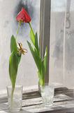 Tulipani con l'8 marzo Fotografia Stock Libera da Diritti