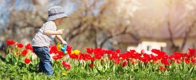 Tulipani d'innaffiatura del piccolo bambino sul letto di fiore nel bello giorno di molla Fotografia Stock Libera da Diritti