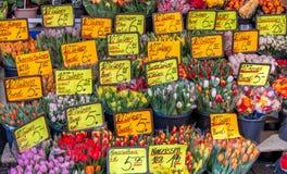 Tulipani da vendere. Fotografia Stock Libera da Diritti
