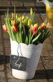 Tulipani da vendere sul quadrato centrale di Cracovia Fotografia Stock Libera da Diritti