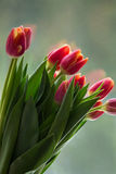 Tulipani davanti ad una finestra Immagine Stock Libera da Diritti