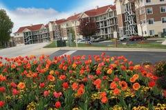 Tulipani davanti al ricorso Immagini Stock Libere da Diritti