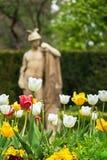 Tulipani davanti alla statua antica sull'isola della stazione termale in Piestany SLO Fotografia Stock