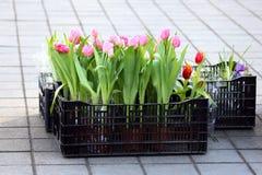 Tulipani dei fiori messi in vendita sulla via Fotografie Stock