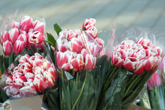 Tulipani dei fiori messi in vendita sulla via Immagini Stock