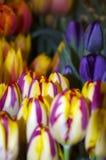 Tulipani del mercato di strada del luccio Immagine Stock Libera da Diritti