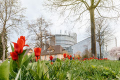 Tulipani della costruzione del Parlamento Europeo e della primavera rossa Immagini Stock Libere da Diritti
