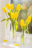 Tulipani della primavera Immagini Stock