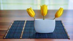 Tulipani della primavera Fotografie Stock Libere da Diritti