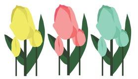 Tulipani della primavera Fotografia Stock Libera da Diritti
