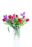 Tulipani della sorgente isolati su un bianco Fotografie Stock Libere da Diritti