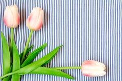 Tulipani dentellare della sorgente Immagine Stock Libera da Diritti