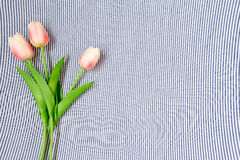 Tulipani dentellare della sorgente Fotografia Stock