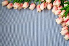 Tulipani dentellare della sorgente Fotografie Stock