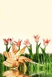 Tulipani dentellare della sorgente su priorità bassa bianca Immagini Stock Libere da Diritti