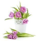 Tulipani dentellare nel flowerpot del metallo immagini stock libere da diritti