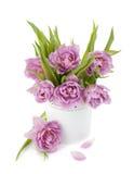 Tulipani dentellare nel flowerpot del metallo fotografia stock