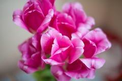 Tulipani dentellare su priorità bassa bianca Fotografie Stock Libere da Diritti
