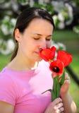 Tulipani di colore rosso dell'odore Fotografie Stock Libere da Diritti