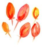Tulipani di rosso dell'acquerello Fotografia Stock Libera da Diritti