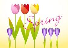 Tulipani e croco illustrazione di stock