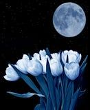 Tulipani e la luna fotografia stock libera da diritti