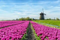 Tulipani e mulino a vento Immagine Stock