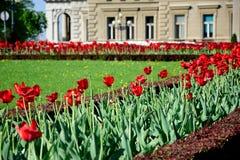 Tulipani e museo fotografie stock libere da diritti