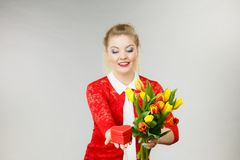 Tulipani e regalo della tenuta della donna Fotografia Stock Libera da Diritti