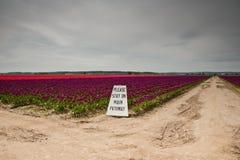 Tulipani e segno Fotografie Stock