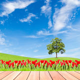 Tulipani ed albero sul campo di erba verde con il pla di legno e del cielo blu Immagini Stock Libere da Diritti
