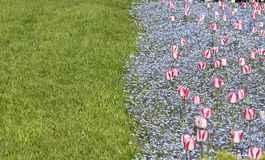 Tulipani ed erba Fotografia Stock