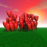 Tulipani enormi misteriosi Fotografie Stock Libere da Diritti