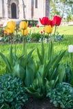 Tulipani festivi su un'aiola immagine stock