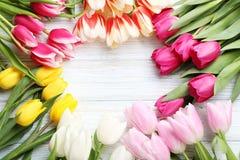 Tulipani freschi Fotografia Stock Libera da Diritti