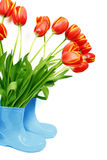 Tulipani freschi in caricamenti del sistema Fotografia Stock