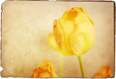 Tulipani gialli illustrazione vettoriale