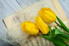 Tulipani gialli Fotografie Stock Libere da Diritti