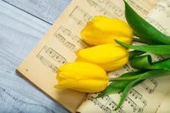 Tulipani gialli Fotografie Stock