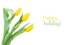 Tulipani gialli con le goccioline di acqua su un fondo bianco fotografia stock libera da diritti