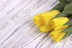 Tulipani gialli della molla su fondo di legno bianco Posto per testo Il giorno della donna 8 marzo Immagini Stock