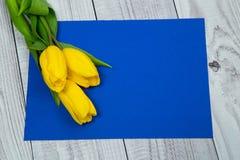 Tulipani gialli e carta blu Immagine Stock Libera da Diritti