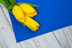 Tulipani gialli e carta blu Immagini Stock Libere da Diritti