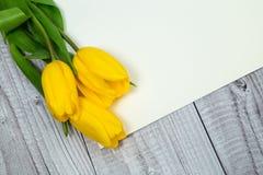 Tulipani gialli e carta luminosa Fotografie Stock Libere da Diritti