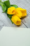 Tulipani gialli e carta luminosa Immagini Stock Libere da Diritti