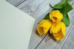 Tulipani gialli e carta luminosa Fotografia Stock
